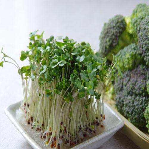 Brócoli germinado